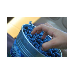 Bucket of Blues